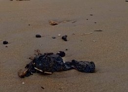 Israel Reports Suspected Oil Spill