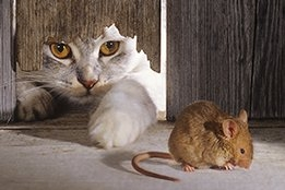 """""""Cat and Mouse"""" Game Between U.S. And OPEC Commences Now That Honeymoon Over Cutbacks Is Over"""