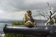 Gibraltar Bunker Calls Hit 18-Month High Last Month