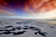 Clean Arctic Alliance Warns of HFO Spill Risk Alongside Record Cargo Numbers on Northern Sea Route