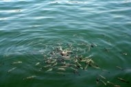 Ship Noise Threat to Fish Breeding Grounds